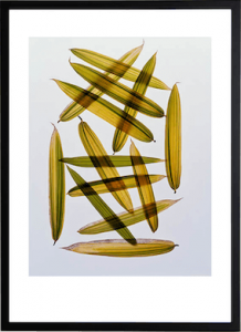 Bamboo Leaves #3